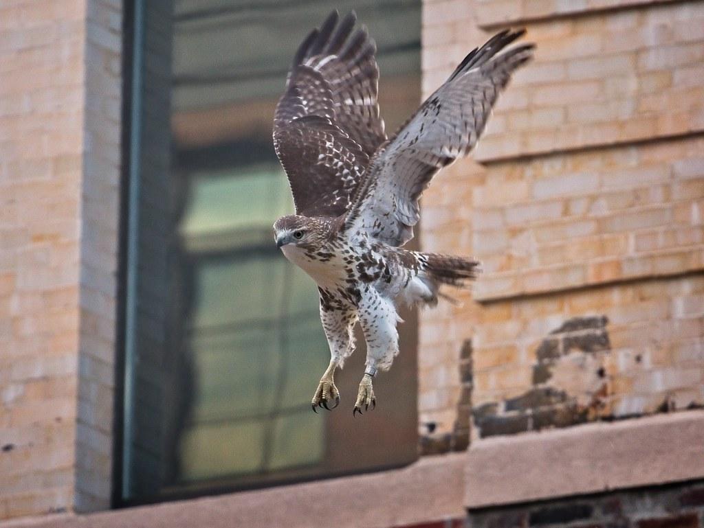Tompkins fledgling #2