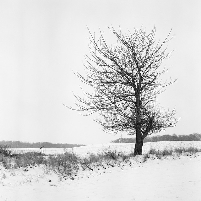 Winter at Söderslätt - Kodak T400CN