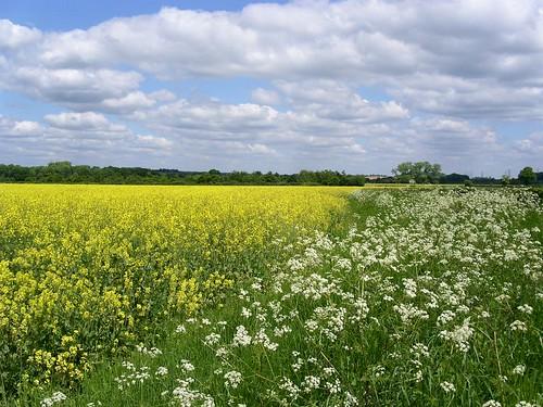 May on the Chawton Round walk