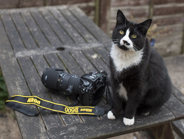 Clyde and the D500, Nikon D750, Sigma 50mm F1.4 EX DG HSM