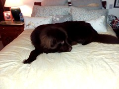 Otis on mama's bed...