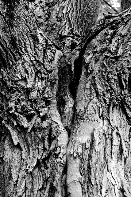 MtAuburntree27a
