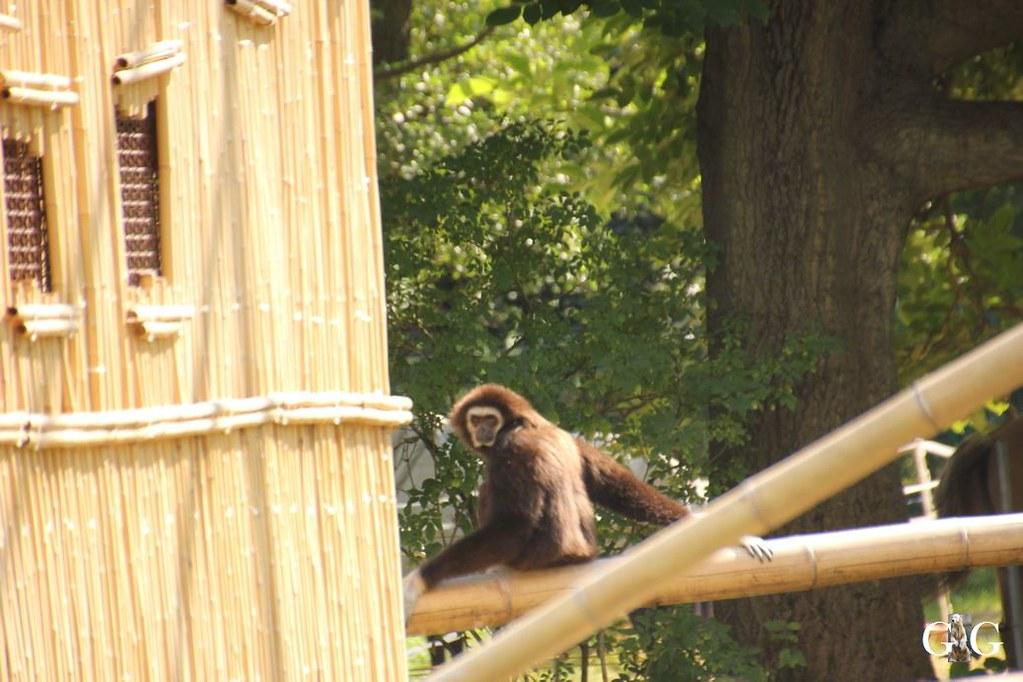 Besuch Tierpark Friedrichsfelde 20.08.1768