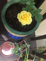 Bloom For Michelle, on the day of her passing. Rest In Peace, my friend.