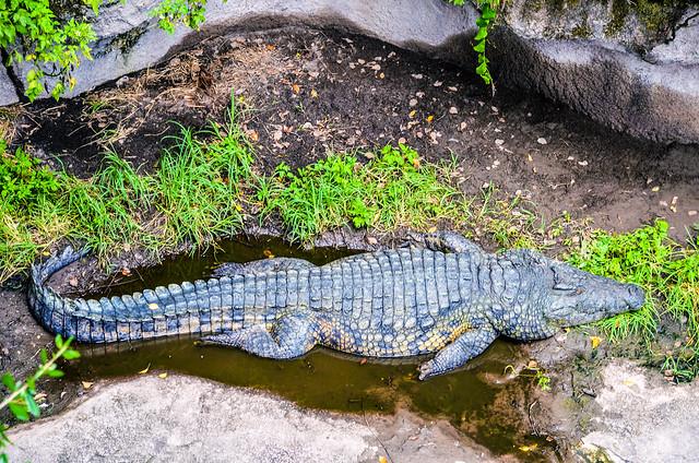Croc Bridge WAT AK