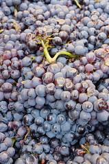 Burgundy Sept 2017-3480.jpg