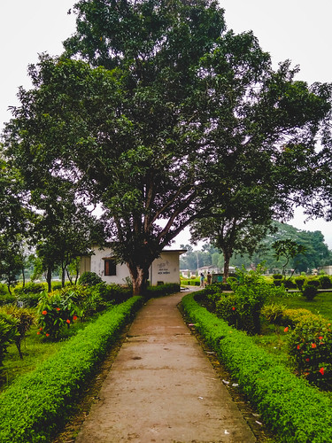rangpur rangpurdivision bangladesh bd nature green tree beautiful xiaomi redmi