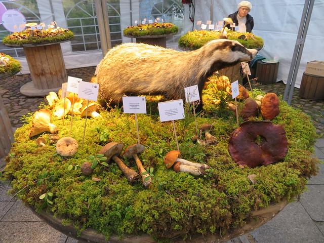 Loodusmuuseumi seenenäitus