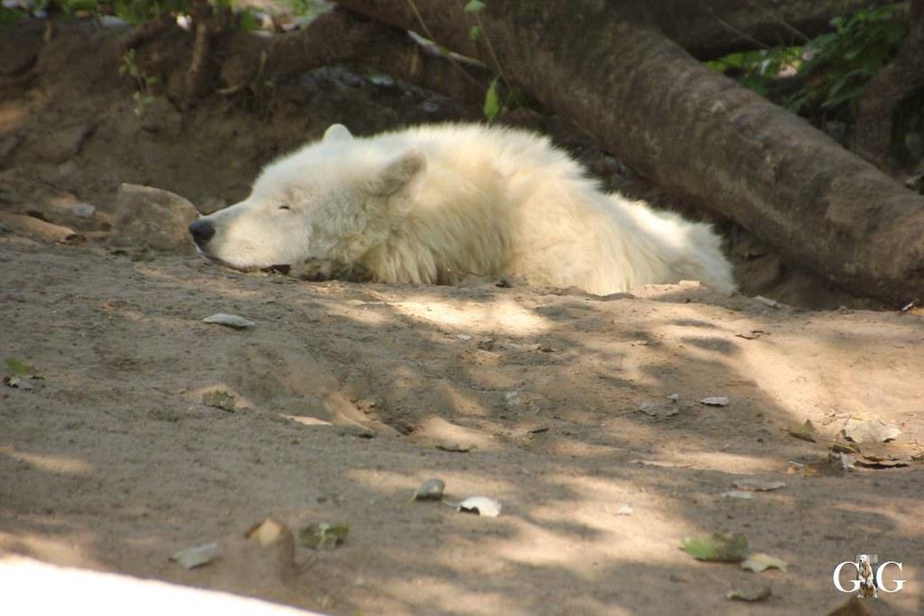 Besuch Zoo Berlin 07.08.201736
