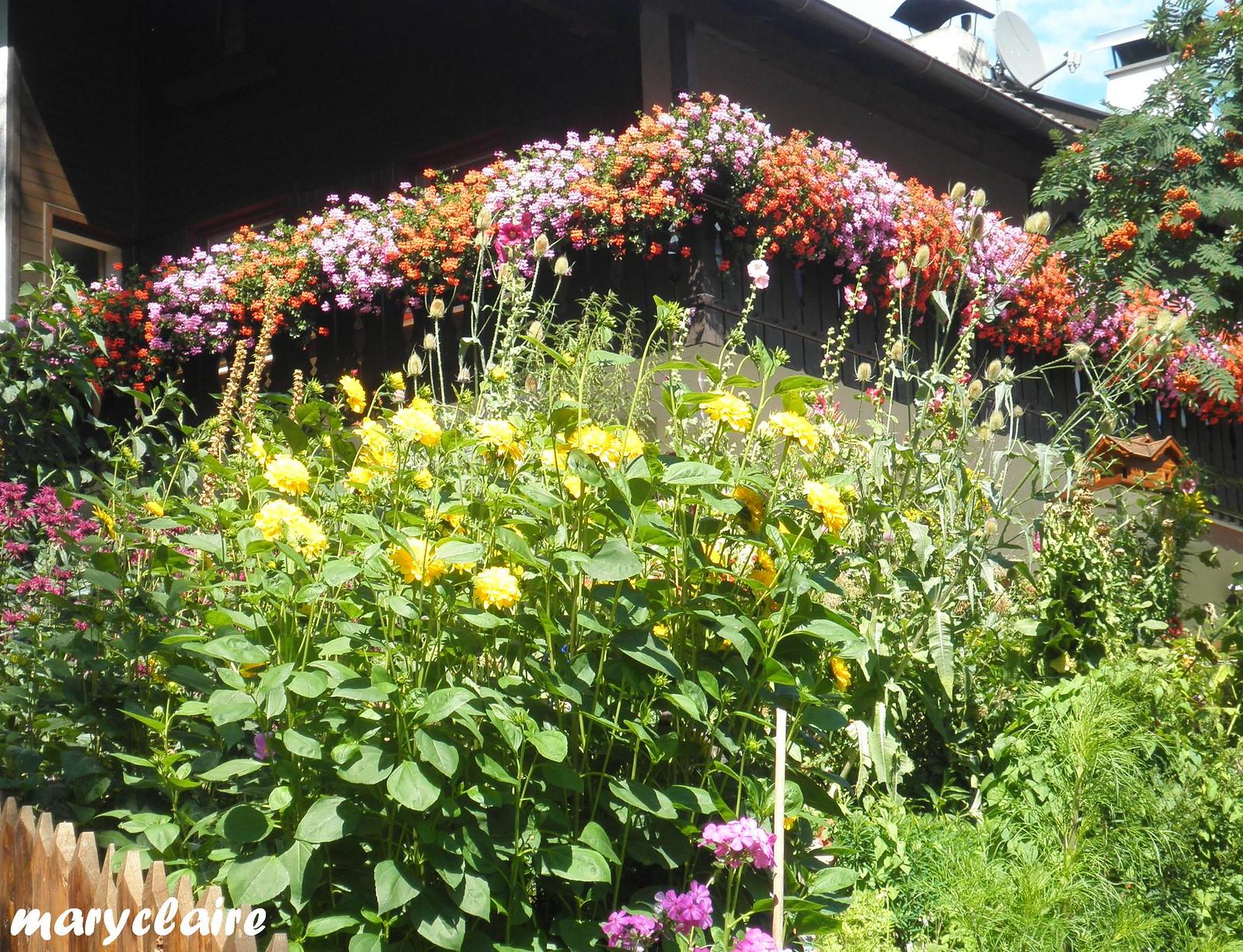 fiori di montagna2