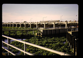 Water Hyacinth At Chainat Dam = チャイナートダムのホテイアオイ