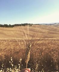 Crete Senesi view! At only 40 km from @borghettobb 😍 a true paradise! #like #follow #cretesenesi #siena #tuscany #italy #myworld #travel #landscape #enjoy #nature #discover 👍🌾