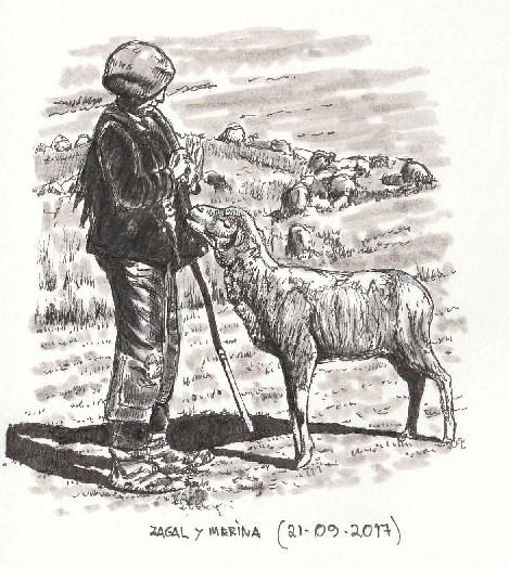 Zagal y oveja merina