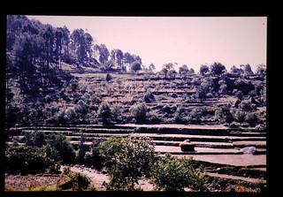Terrace Plantation
