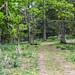 Forêt d'Akfadou