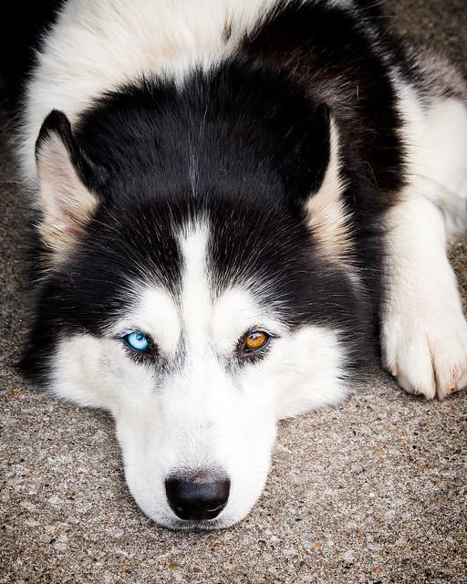 A dog's life - 2193XT2X0446