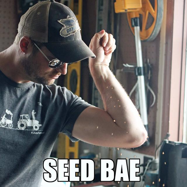 Seed Bae