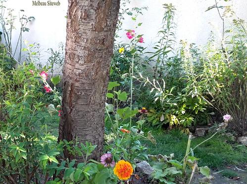 Par une belle journée d'automne au jardin