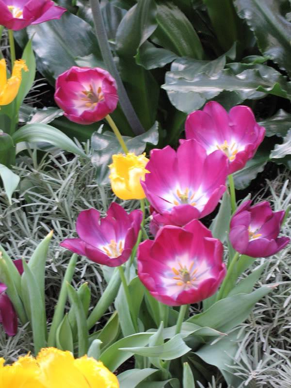 Flower6.jpg-original