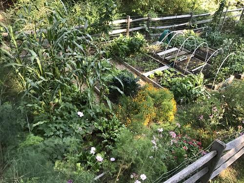 home garden IMG_0424