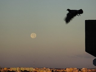 La Luna #moonset #bird #moonligth #moon #laluna
