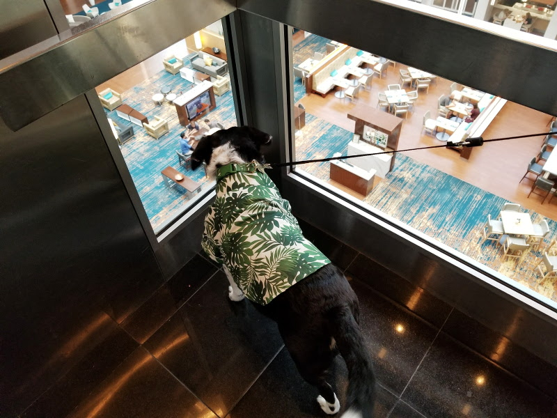 elevator-doubletree-hilton-dog-louis