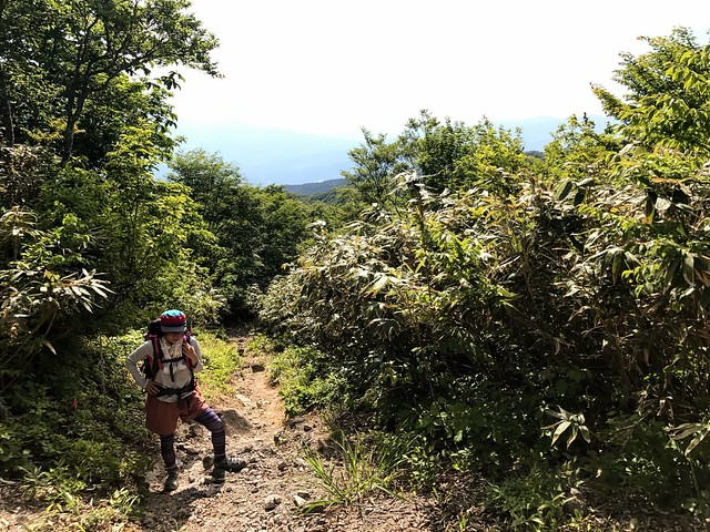 鷲ヶ岳 桑ヶ谷ルート 登山道 しな