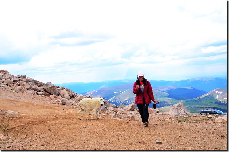 Mountain Goat 4