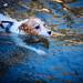 Swimming Swiftly