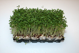 07 - Zutat Kresse / Ingredient cress