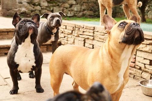 Doggy Style Ternyata Posisi Bercinta Yang Tidak Disukai Wanita