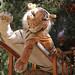 Tiger by NadaMucho.com