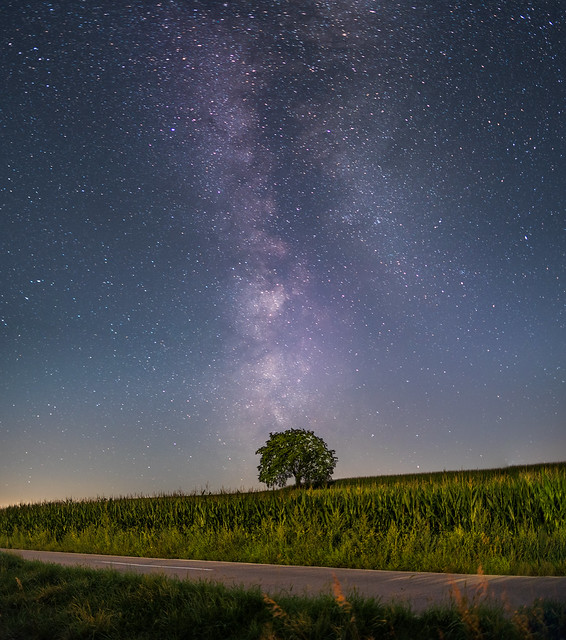 Einsamer Baum mit Milchstra, Nikon D750, Sigma 28mm F1.8 EX DG Aspherical Macro