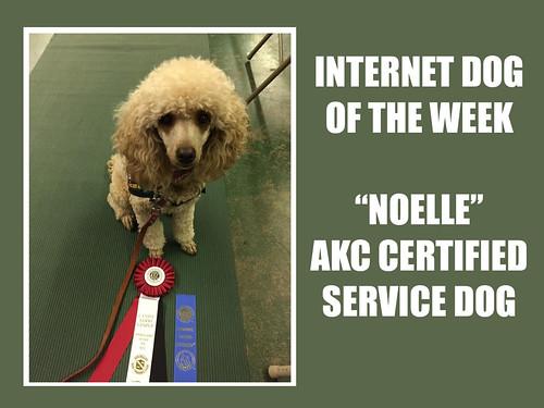 ikotw noelle service dog