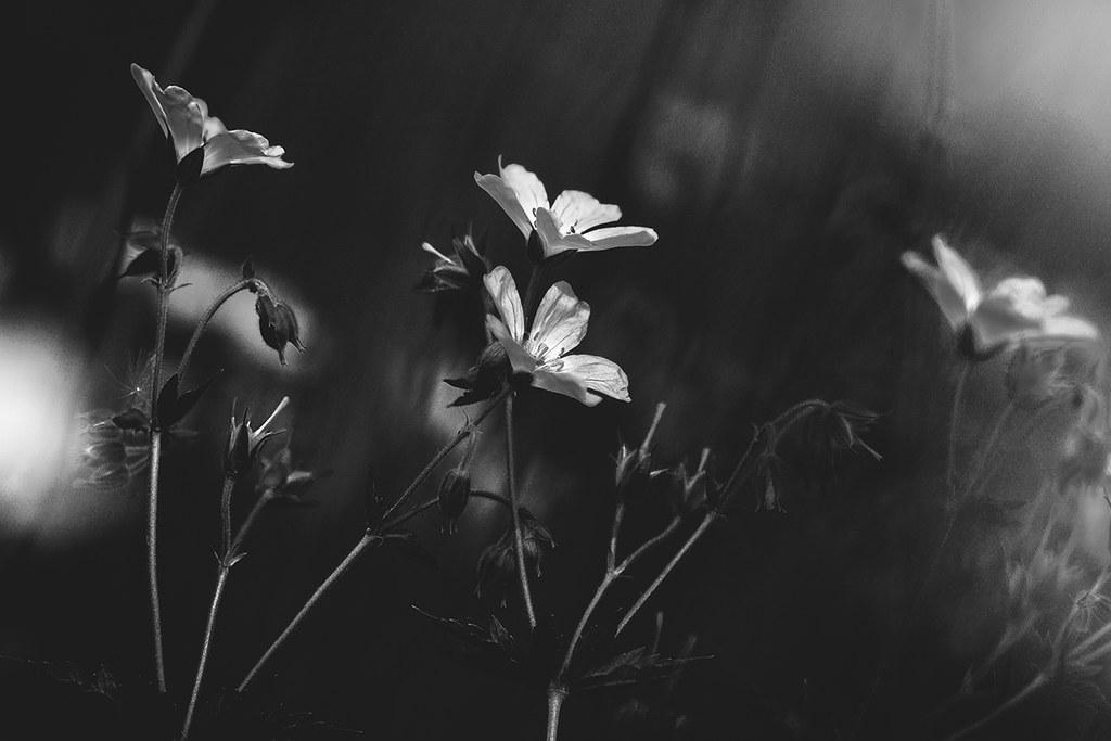 photography_valokuvaus_3