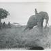 Olifantendressuur in Belgisch-Kongo | Elephant training in the Belgian Congo by Liberaal Archief - Liberas