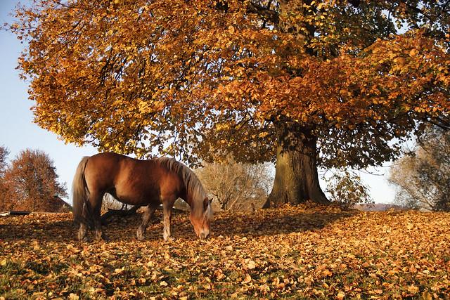 Cheval d'automne