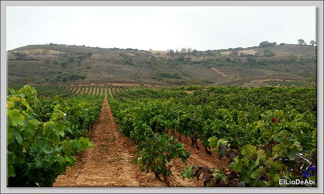 La Rioja siempre es un lugar dulce (6)