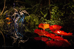 Nighttime Magic at the Garden