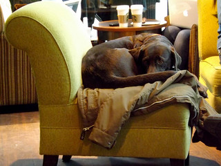 A curled up dog trying to get warm after getting caught in the rain outside a Starbucks in Dresden, Germany