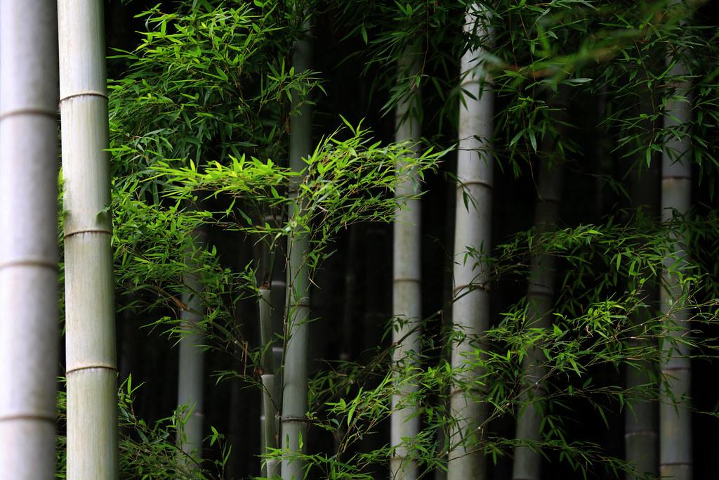 Bamboo At Heirin-ji