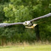 International Birds of Prey Centre (21)