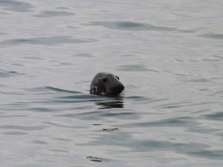 Seal Visitor