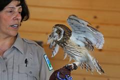 owl LMP4B