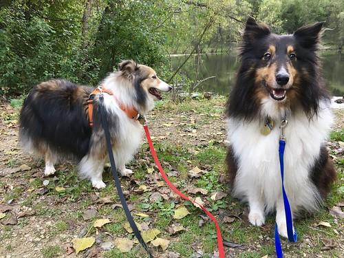 IMaggie and Jasper on a walk