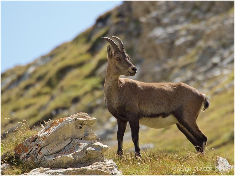 Randonnée au Col de la Vanoise 36729380636_e643cebd04_o