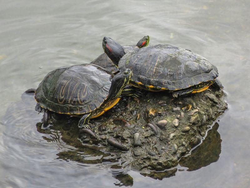 Pond sliders