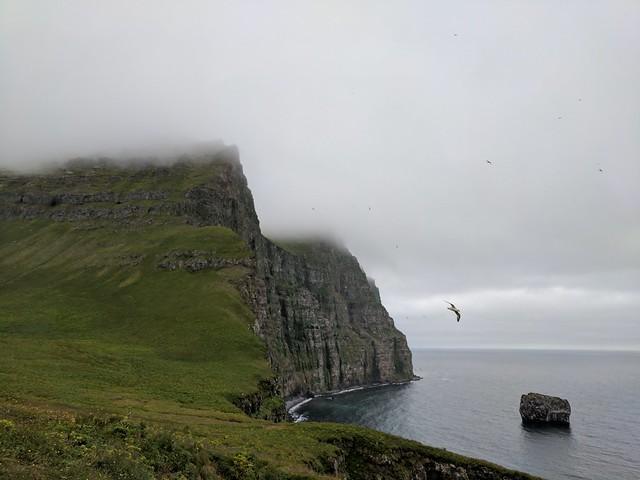 King and Queen of Cliffs in Hornstrandir