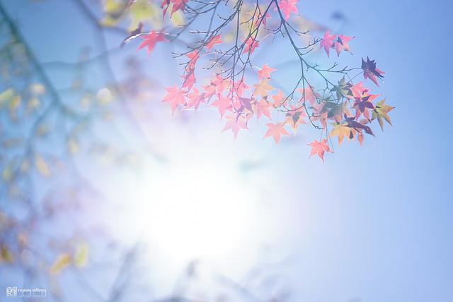 十年,京都四季 | 卷三 | 古都日常 | 01