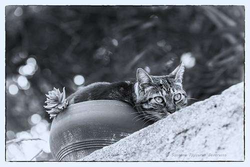 Feline blossoming (Fioritura ... felina)
